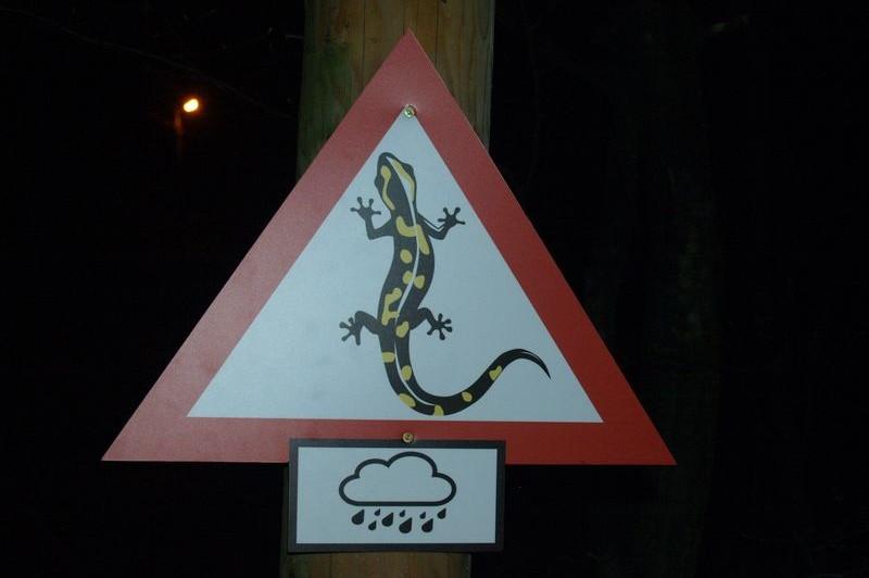 Vigyázz, szalamandrák!