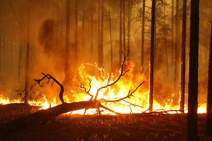 erdő tűz