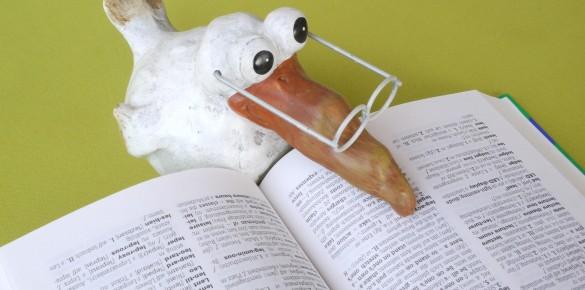 Zöld könyvtár, avagy éljenek a madarak!