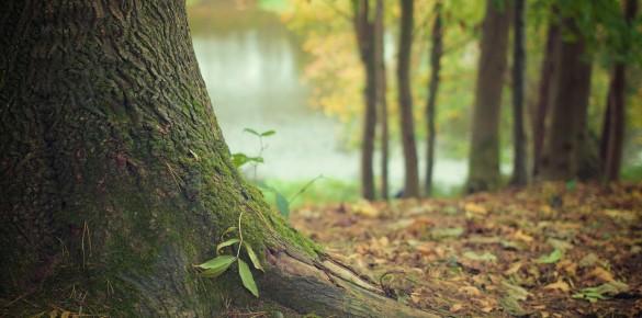 Pályázatok környezetre – fásításra és környezeti nevelésre