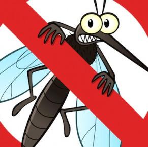 Szúnyoggyérítés 2