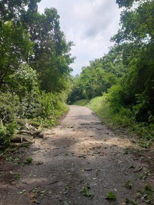 kidőlt fa az óhegyi úton